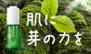 植物が芽吹く生命力が力強い美となるフィトブリーゼシリーズ