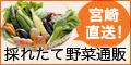 宮崎直送!採れたて野菜通販「百姓隊」